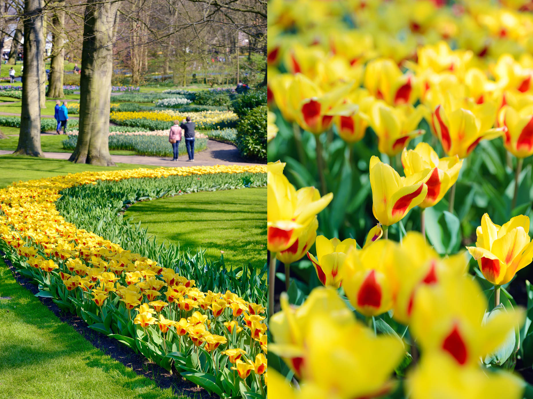 collages_keukenhof_A_APF