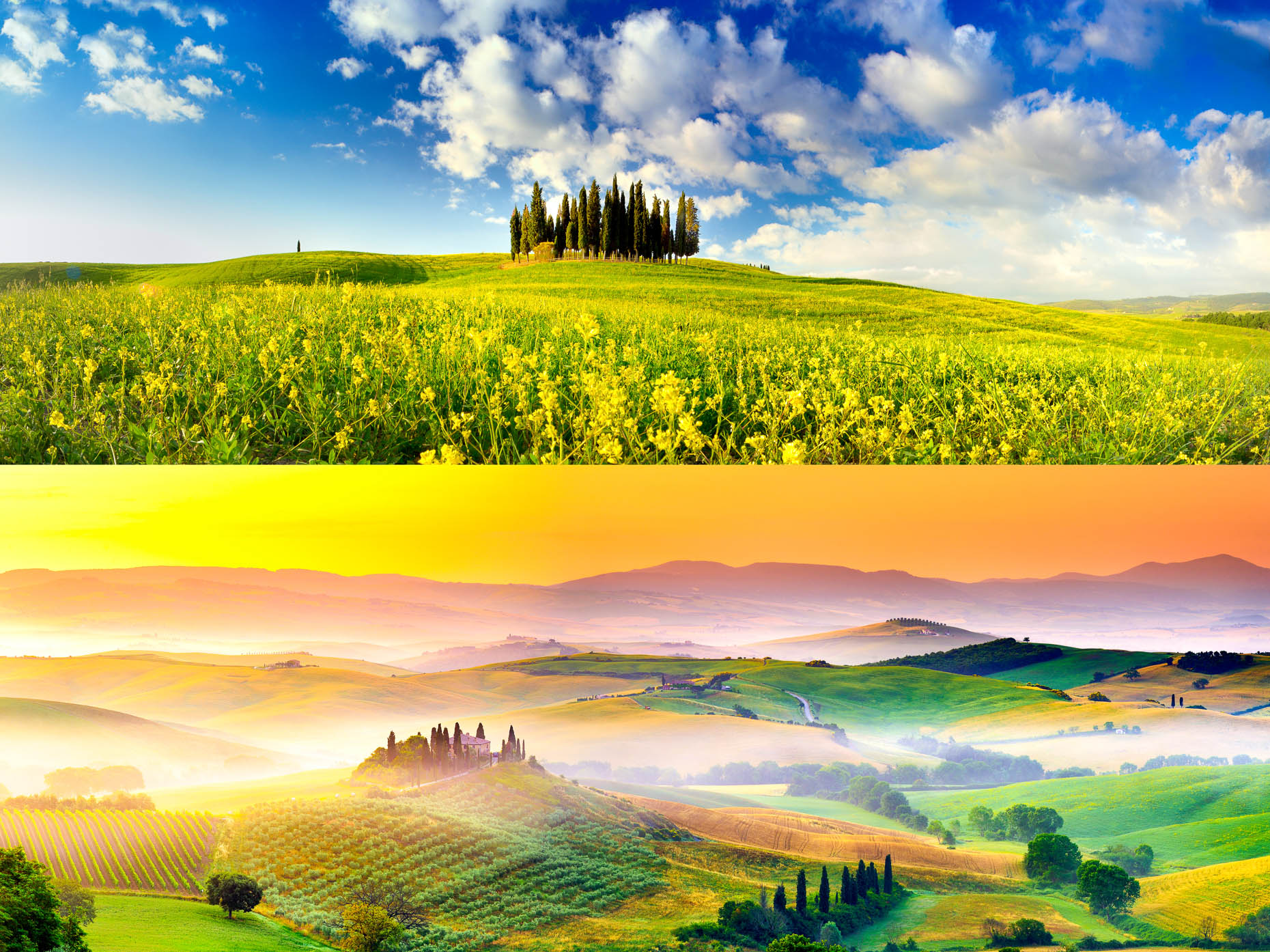 collages_orcia_APF