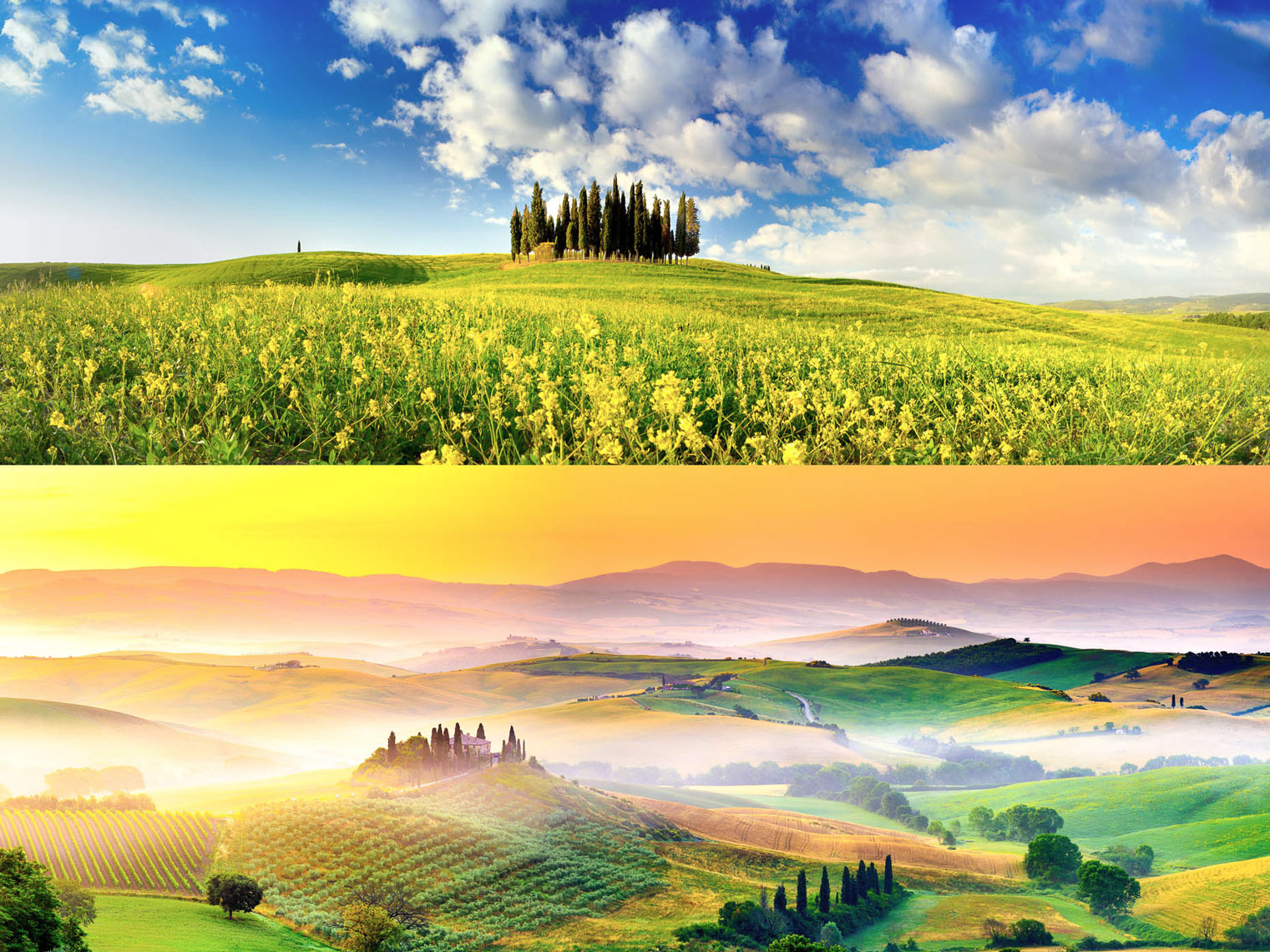 collages_orcia_B_APF